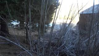 "Hot Springs Canyon Part 7 ""Visiting The Scossa Cabin"""