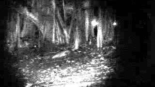 Sembawang Park Investigation video 4