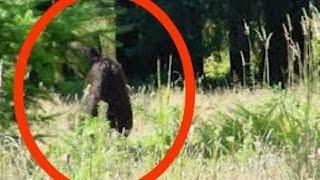 Sasquatch Attack - Real Bigfoot Attack Documentary HD