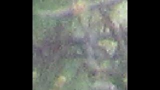 Bigfoot, Sasquatch, & Other Entities CLOAKED!!!! Don't Cry Pareidolia, Just Wake Up