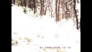 Paranormal Central™ Bigfoot Investigation Bigfoot is REAL 100%