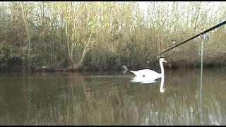 FISHING AT MITCHAM COMMON.Saturday 25th march 2017