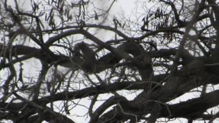 Tree Portals? Tree Magic? Tree Trolls?