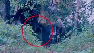 Real Ghost Caught on Tape Near Forest Cabin | Shocking Ghost Sighting During Trekking | Scary Video