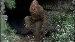 New Bigfoot Evidence - National Geographic Documentary