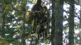 Bigfoot Report! Prepping! Paranormal Central™ April 19 2015