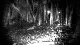 Sembawang Park Investigation video 3