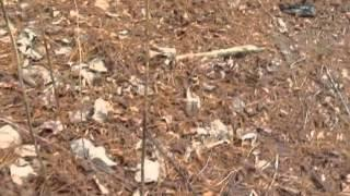 Day Hike With 2 Good Friends Mike Ware And Robo Hiker Tony Part 4