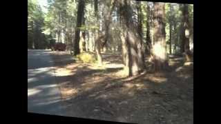 "Calaveras Big Trees Part 9 - ""The Hunter Becomes The Prey"""