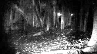 Sembawang Park Investigation video 5