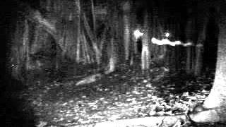 Sembawang Park Investigation video 2