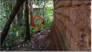 Scary Ghost Videos | Ghost Caught On Tape 2017 | Real Ghost Caught On Tape Behind The Tree