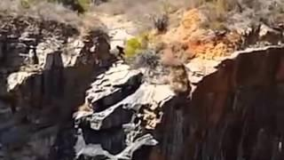 Odd creature filmed at Barrington Quarry in Western Australia Breakdown