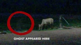 Cow spooked by ghost in football ground! .Δε γίνεται με τίποτα!Φάντασμα τρόμαξε αγελάδα!