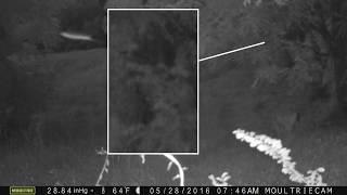 Tennessee Bigfoot & Flying Rod  Trail Cam Photos: WR BRUCE  Bigfoot Research