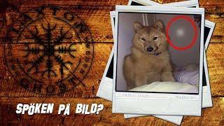 Spöken På Bild - S2 Del 3 - Katten och hunden reagerar - LaxTon Spökjägare