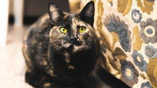 True Story Of A Mysterious Green-Eyed Cat!! - Documentary 2017