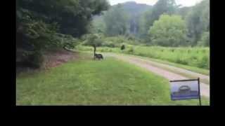 Bigfoot in rural North Carolina on 8/6/15