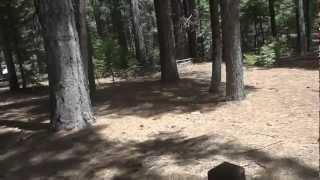 """Calaveras Big Trees Part 1 -  """"An Introduction To An Ancient Forest"""""""