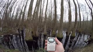 Bear Creek Swamp Full Investigation Footage Spirit Box Phantom Car Real Ghost Hunting