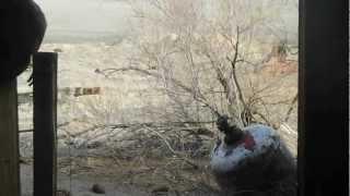 "Sodaville Nevada - Part 6 ""The Butcher"""