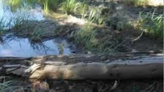 "Mount Raymond -  Part 33 ""Sunset Lakes Pristine Beauty"""