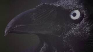 El Cuervo - Homenaje a Édgar Allan Poe