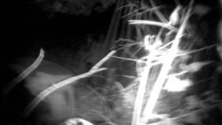 """Fredericksburg Cemetery Part 2 """"Strange Finds"""""""