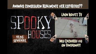 Análise Espiritual - Luan Novitt TV - Meu Cachorro viu Fantasma!!!