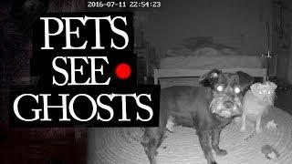 10 Videos of Animals Seeing Real Ghosts