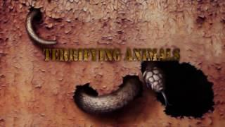 Most Terrifying Creepy Animals From Around The World | Real Scary Videos