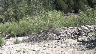 "Kongsberg Part 2 ""Silver Creek"""