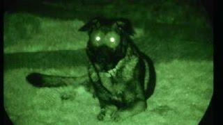 Exploring Creepy Abandoned Haunted House - Dog Sees Ghost Caught On Tape
