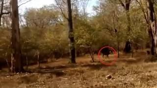 Real GHOST Videos 2016 ~ Ghost in FOREST Attacking Deer LIVE ~ Scary Ghost Video Caught on TAPE