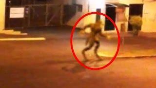5 Criaturas Míticas Grabadas en Video y Vistas en la Vida Real