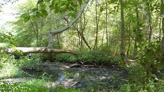 Myths & Urban Legends: Ronkonkoma County Park