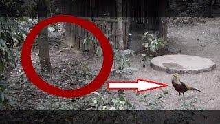 Ghost activity caught in haunted bird aviary!! Real Ghost Caught on Tape! Scary Videos