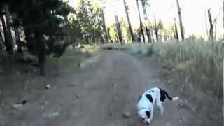"Bear River Reservoir - Part 11 ""Tree Banging"""