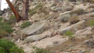 """Woodfords Manor & Cary Peak - Part 10 """"Ascension"""""""