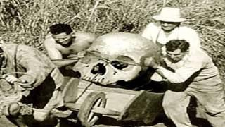 Unexplained Mysteries Of The Horned Skulls And Giants Of North America