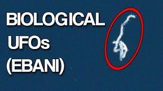 Mysterious Biological UFO Entities (EBANI)