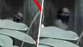 Scary Videos | Terrific Ghost Attack Caught On Camera | Real Ghost Video | Ghost caught on tape 2016
