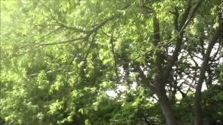 Mitcham Common Daytime Iinv One Island/15/5/2015 Part 4 of 4