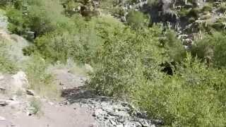 """Kings Canyon Nevada - Part 2 """"Into The Forest We Go"""""""