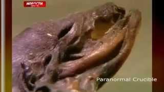 Dead Alien Found In Russia?
