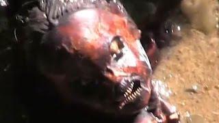 Mermaid body Caught On Video, Mermaid In Real Life 风行视频美人鱼的身体,美人鱼在现实生活中