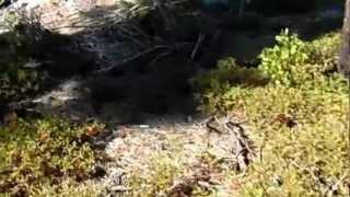 "Bear River Reservoir - Part 29 ""Sea Of Thorns"""
