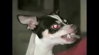 Black metal singing dog