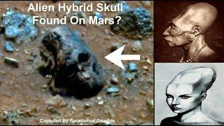 Alien Hybrid Skull Found On Mars?