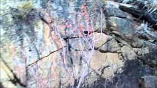 "Hot Springs Canyon Part 26 ""Hidden Jewels"""